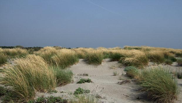 Le dune degli Alberoni in pericolo